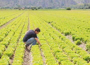 Siena, agricoltura in affanno