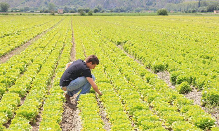 Agricoltura, Marchetti: la Toscana dei giovani senza terra. «La Regione boccia il 63% delle richieste e paga solo 1/4 di quelle ammesse». Il Capogruppo regionale di Forza Italia su dati Coldiretti «Under 35 aspiranti agricoltori lasciati a sogni spenti dalle burocrazie»