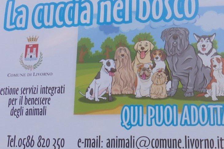 Livorno, Tenerini e Amato: Il nuovo canile ancora a regime ridotto