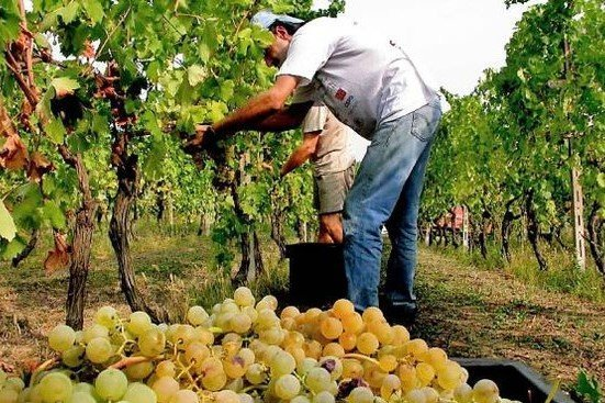 Siena, agricoltura: rischio assenza manodopera