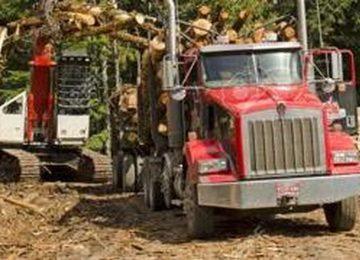 Attività forestali: Richiediamo la ripresa immediata
