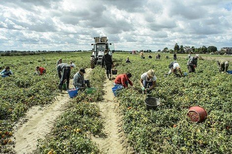 campi raccolta agricoltura