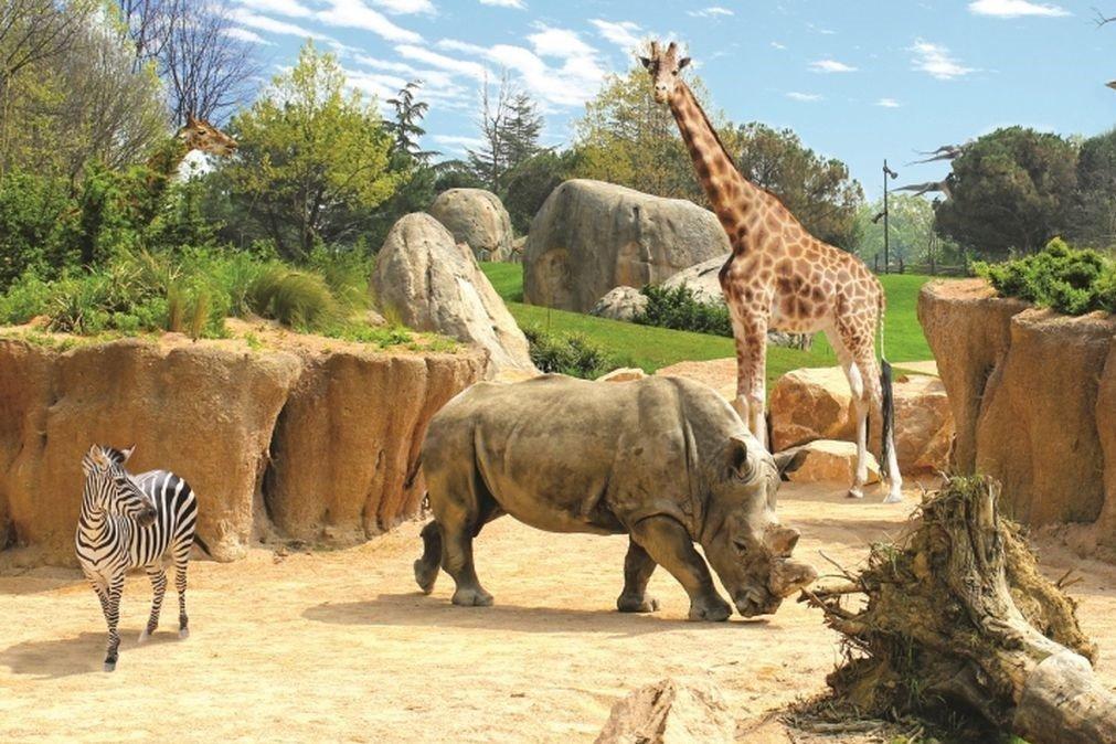 Anticipare riaperture giardini zoologici e parchi permanenti