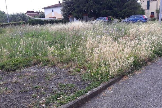 Vicchio erba alta