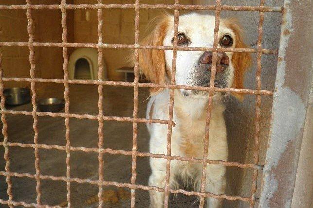 Stella: istituiremo il garante regionale diritti animali