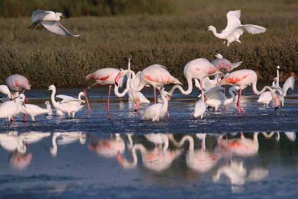 Orti Bottagone: salvaguardiamo i fenicotteri rosa