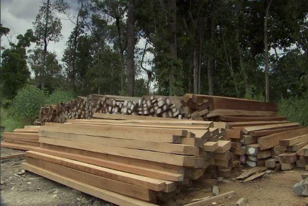 Imprese boschive, salvaguardare redditività e attività