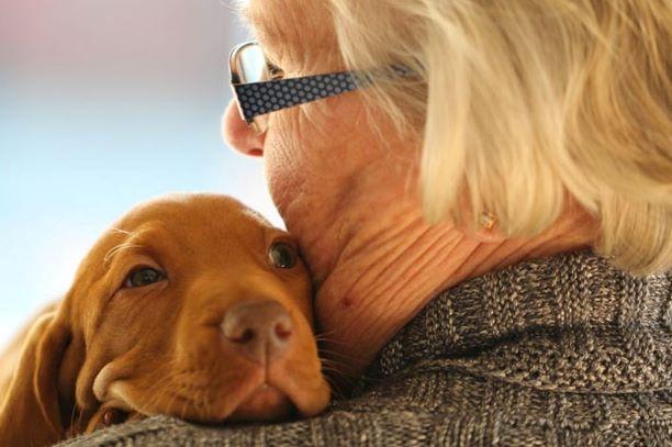 Pet therapy RSA Livorno