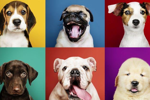 26 agosto: oggi è la Giornata mondiale del cane